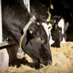 NCW Has Come Up With A Programme To Empower Women In Dairy Farming